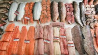 Shop for the Freshest Fish